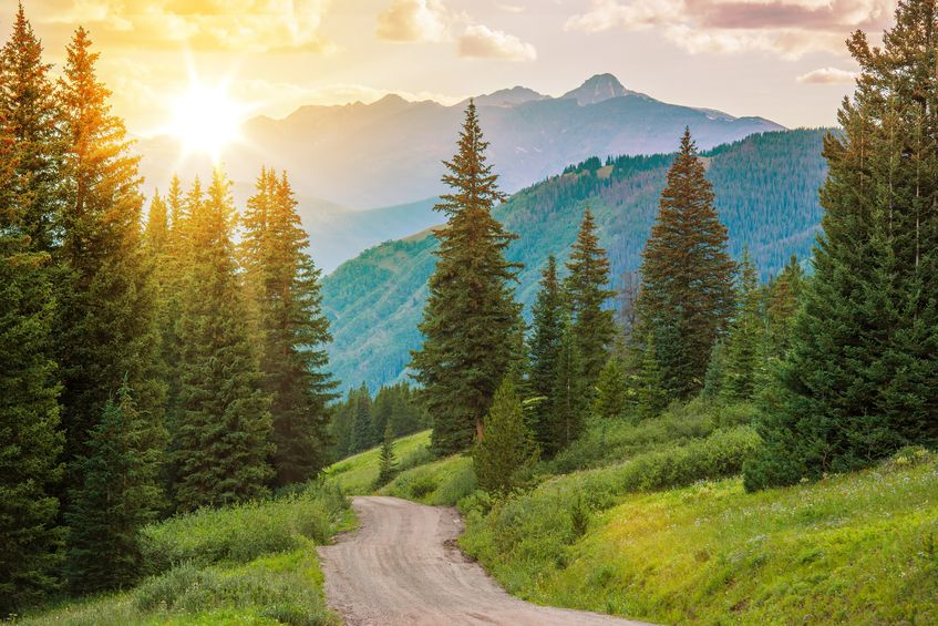 a path meanders through a mountain forrest | fort collins hoa management